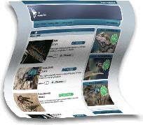 Razvoj spletnih trgovin